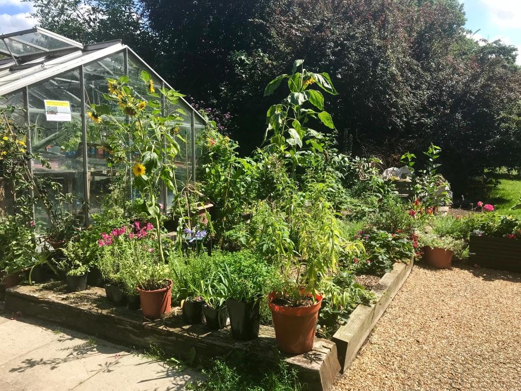 Brentford Dock greenhouse gimme veg
