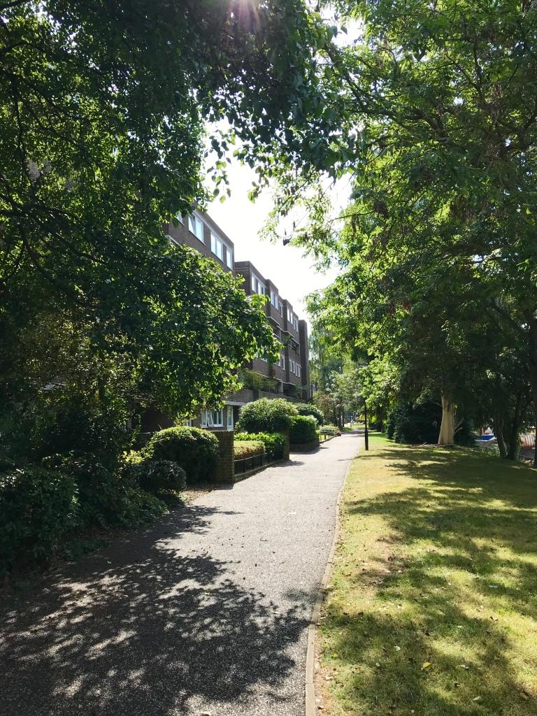 Brentford Dock trees gimme veg